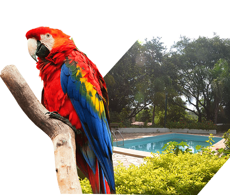 chacara-papagaio-top-1.2